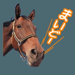 大阪弁をしゃべる馬のスタンプ
