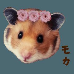 ハムスターと愉快な動物たち