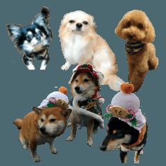 にしむーさん、あみさん、ゆきなさん達の犬