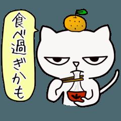 """しろねこ ロック6 """"2017 New Year"""""""