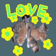 リアル猫キジトラのミミ