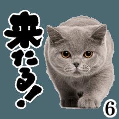 猫写真スタンプ6