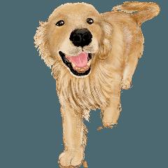 優しい犬!ゴールデンレトリバー