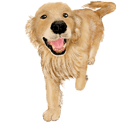 [LINEスタンプ] 優しい犬!ゴールデンレトリバー