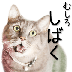 関西弁リアル猫(写真2)