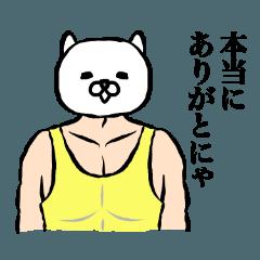 ファンシーマッチョ(日常使い)