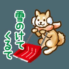 新潟弁を話す柴犬たち2(茶柴&黒柴)