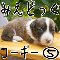 みえどっぐスタンプ コーギーカーディ編 5