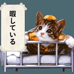 なめ猫3 ~マジでなめんなよ~