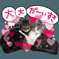 うちの猫のスタンプ(♥Ver.)