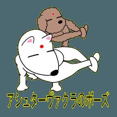 ヨガいぬ(柴とトイプー)