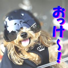 バイク犬、ティナ 2