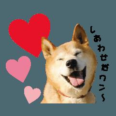 HOKKAIDOしっぽの会 犬猫スタンプ1