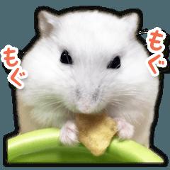 ハムスター☆だいふく ver.2