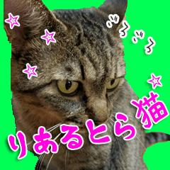 りあるとら猫 とらちゃん☆