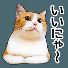 明るい茶白猫♪