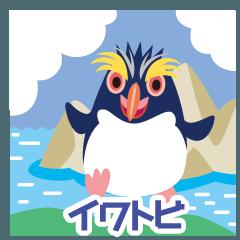 可愛くてカッコイイ!!イワトビペンギン