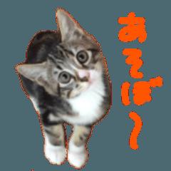 かわいい猫 リオくん